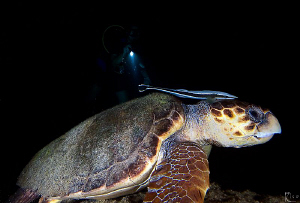 &quot;Nightly Encounter&quot; .  Common Sea-Turtle ( Caretta Carett... by Rico Besserdich 